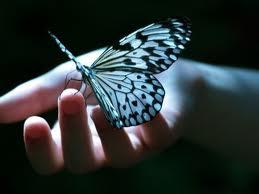 borboletasnamao